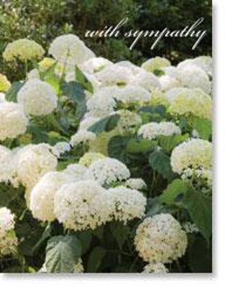 Picture of White hydrangea bush