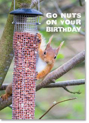Picture of Red squirrel