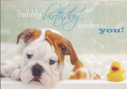 Picture of Dog in bath - bubbly birthday