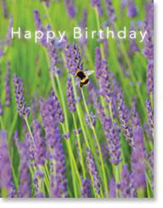 Picture of Bumblebee on lavender